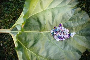 An enormous rhubarb leaf is the blanket a grouping of coin sized tumbled minerals.